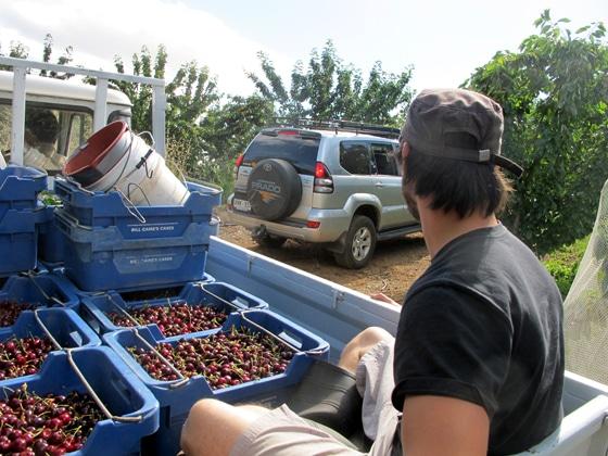 7_Fruit-Picking-Adelaide