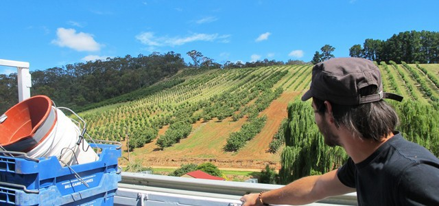 Fruit Picking Australien