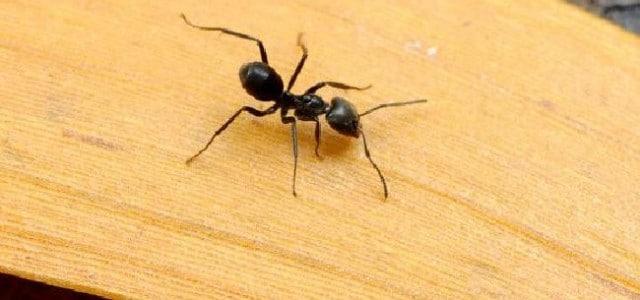 Mann überlebt im Australischen Outback indem er Ameisen isst