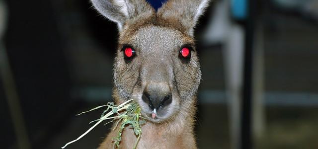 20 Gründe wieso du nicht nach Australien solltest