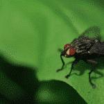 Deutscher Backpacker überlebt, indem er Fliegen isst