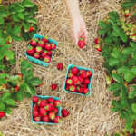 10 Tipps, wie du Farmarbeit in Australien überstehst