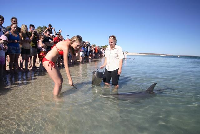 Shark Bay Westküste Australien