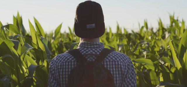 8 tolle Orte für Farmarbeit in Australien