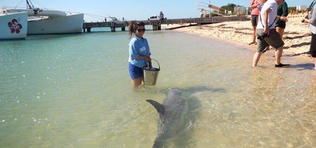 Traumjob in Australien: Mit Delfinen arbeiten