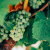 Die 8 besten Orte für Fruit Picking Jobs in Südaustralien