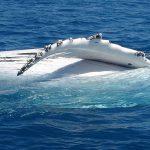 Wale in Australien beobachten: Hervey Bay