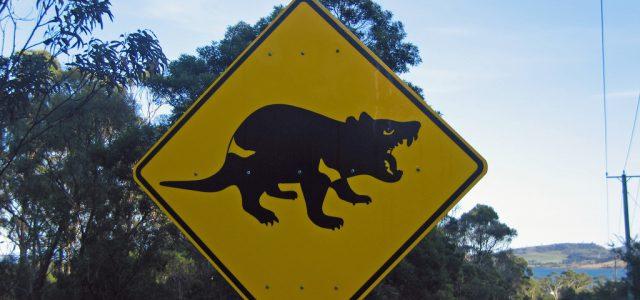 10 unglaubliche Fakten über den Tasmanischen Teufel
