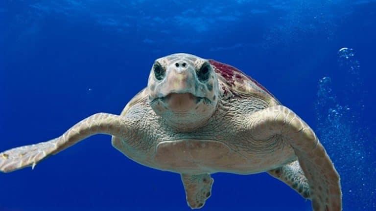 """Tiere im Great Barrier Reef – Die """"Great 8"""""""