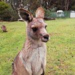 aupair in tasmanien 9