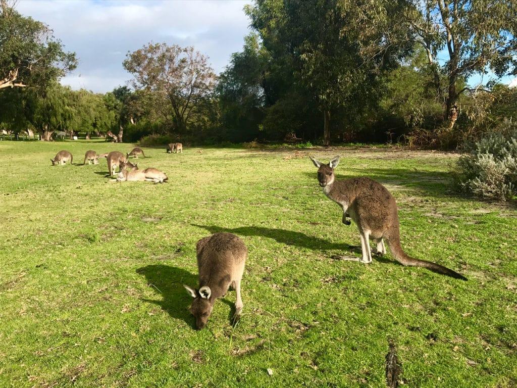 australien reisen 7