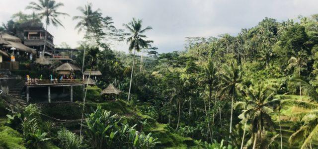 Ubud in Bali – Das solltest du nicht verpassen