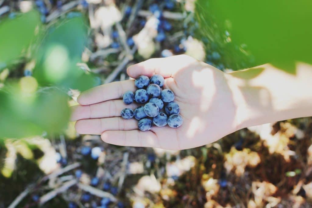 fruit picking ernten