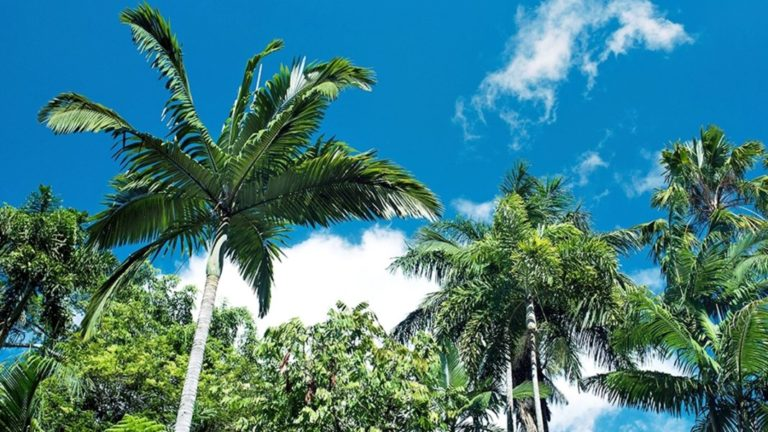 Ostküste Australien Roadtrip: Sydney nach Cairns