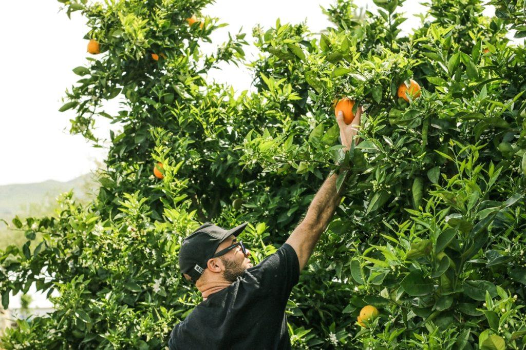 fruit picking Australia roadtrip